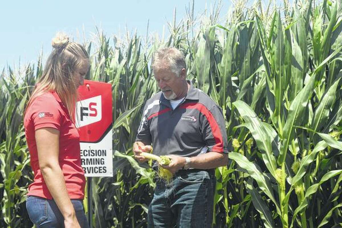 Prairieland FS staff members Nichole Licht and Dan Maggart look at an ear of corn Friday at the agricultural cooperative's crop test plot north of Winchester.