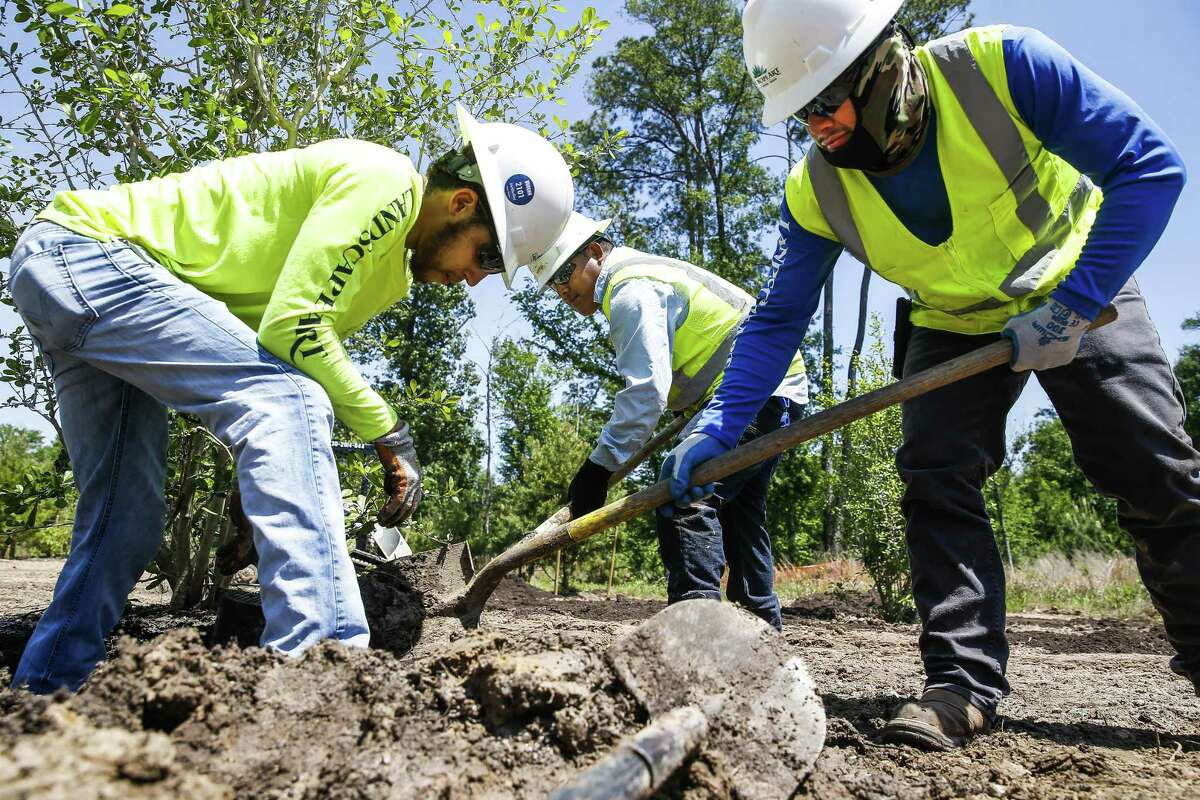 Andrew Woodson, left, works alongside H-2B visa holders Marco Atrisco, center, and Olegario Molina, right, as they plant trees in the eastern glades of Memorial Park in Houston as employees for Landscape Art Inc.