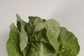 This undated photo shows romaine lettuce. U.S. health officials said tainted canal water appears to be the source of a national food poisoning outbreak linked to romaine lettuce. About 200 people were sickened in the E. coli outbreak, which started in the spring. Five people died.
