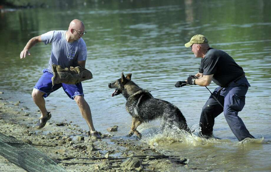 Brookfield Police Sgt. Jeff Osuch, left, and Danbury Officer Joe Pooler train Dirk at the Brookfield Town Park Monday, July 2, 2018. Photo: Carol Kaliff / Hearst Connecticut Media / The News-Times