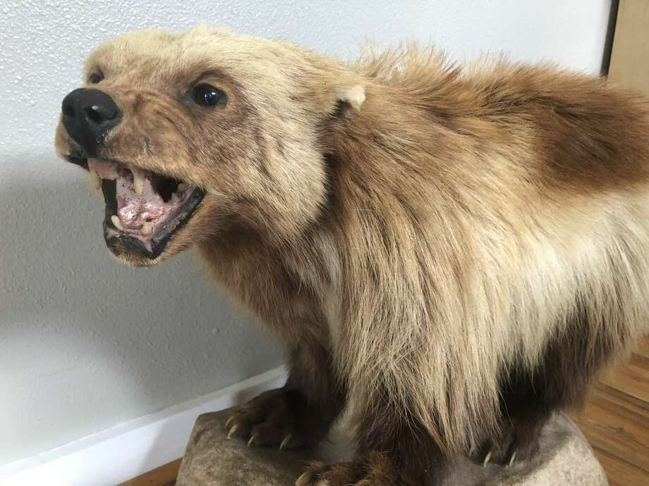Meet Clarence, Battle Royale's taxidermy mascot. Photo: Craig Hlavaty