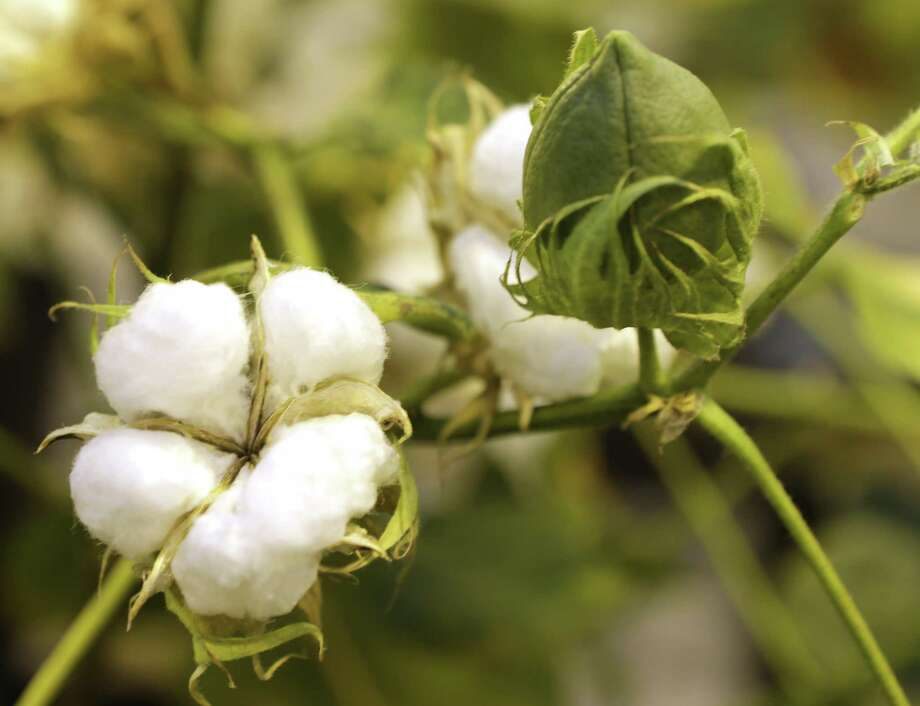 PHOTOS: The great food debate