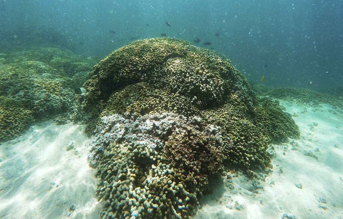 Hawaii Gov. David Ige signed legislation that will prohibit the sale of sunscreens that contain oxybenzone and octinoxate, which have been linked to widespread damage to coral reefs.