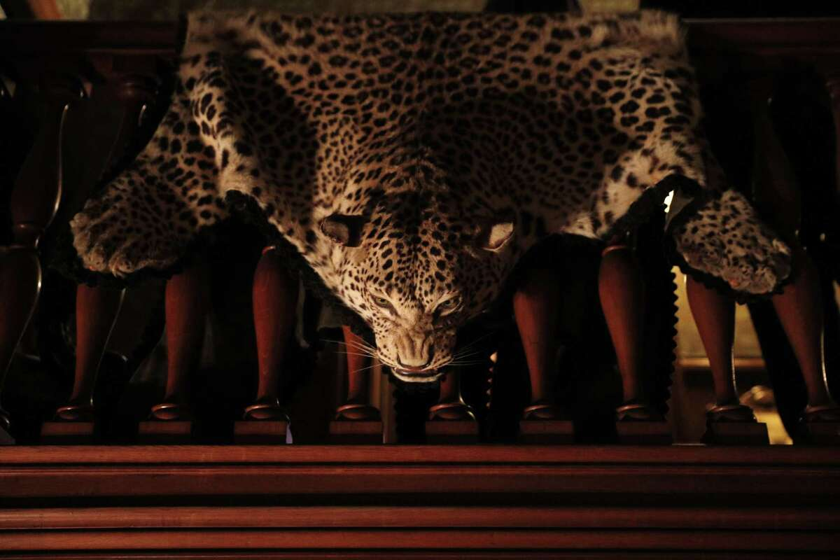 """A leopard skin hanging over a stair railing is part of the decor at the William Westerfeld House in San Francisco. """"Snaggletooth,"""" a short horror comedy, was filmed in the house."""