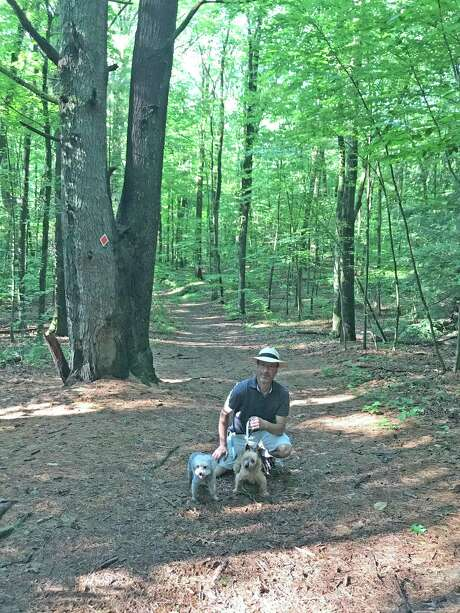 David Kalish of Halfmoon, a former Associated Press reporter, gathered the facts and round up support to help keep Saratoga County from performing logging operations in Kinns Road Park. He walks the park daily with dogs Luna and Tilly. Photo: Joyce Bassett, Times Union