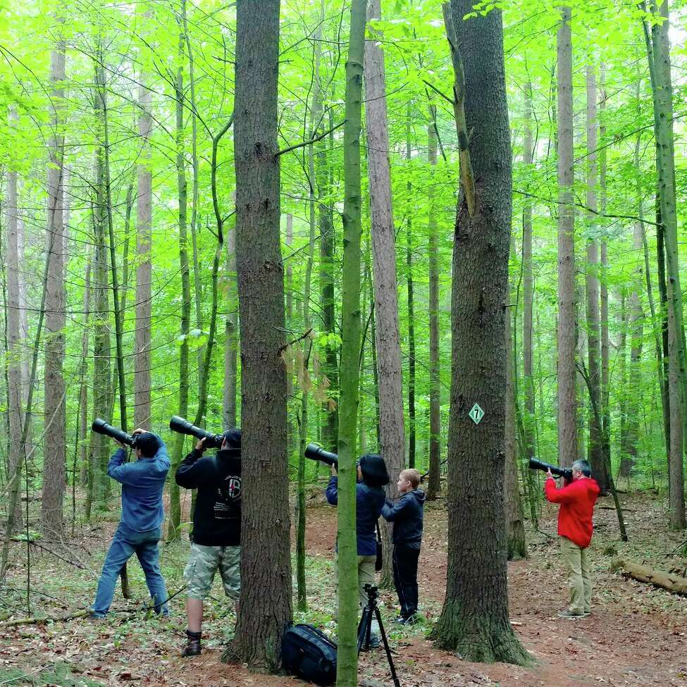Photographers flock to Kinns Road Park in Clifton Park to document the owl family of five. (Tony Perez / Special to the Times Union)