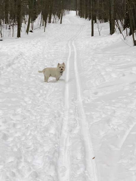 The town of Clifton Park grooms the trails of Kinns Road Park for cross country skiing. (Joyce Bassett / Times Union) Photo: Joyce Bassett, Times Union