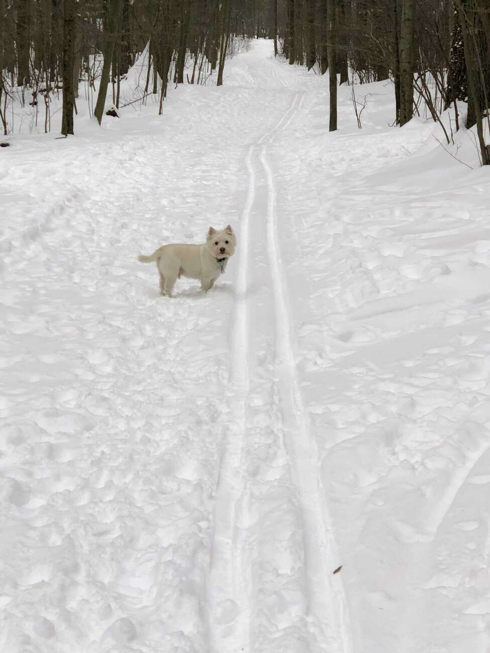 The town of Clifton Park grooms the trails of Kinns Road Park for cross country skiing. (Joyce Bassett / Times Union)