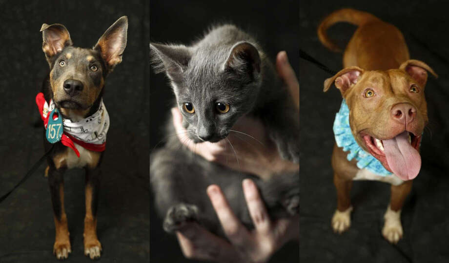 See which kitties and puppies at the Harris County Animal Shelter need a home.