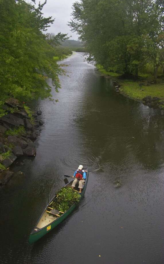 A biology intern with the U.S. Fish and Wildlife Service at Great Meadows National Wildlife Refuge paddles down the Sudbury River with a canoe full of water chestnut. Photo: File Photo / Connecticut Post Contributed