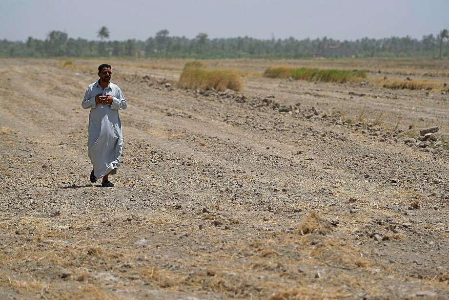 An Iraqi farmer walks through his fallow field where he normally grows rice in the town of Mishkhab. Photo: Anmar Khalil / Associated Press