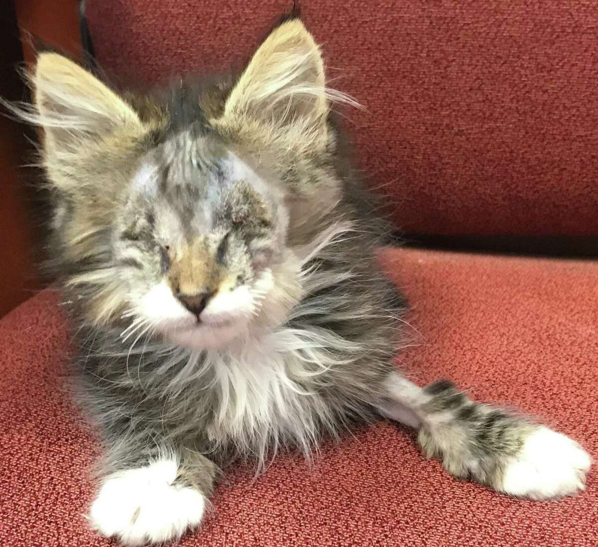 In late June, a West Side resident took a sick kitten he?'d found to ACS with an upper respiratory infection that required the surgical removal of both eyes. The shelter was hoping to find a adoptive home for the kitten, who they named Billy.
