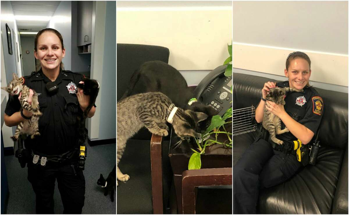 The Harris County Precinct 5 Constable's Office rescued three kittens found in a bag abandoned on the side of the road earlier this week in a West Memorial neighborhood.