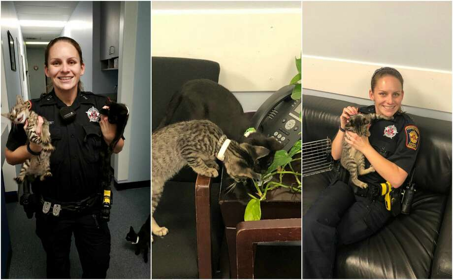 The Harris County Precinct 5 Constable's Office rescued three kittens found in a bag abandoned on the side of the road earlier this week in a West Memorial neighborhood. Photo: Harris County Precinct 5 Constable's Office