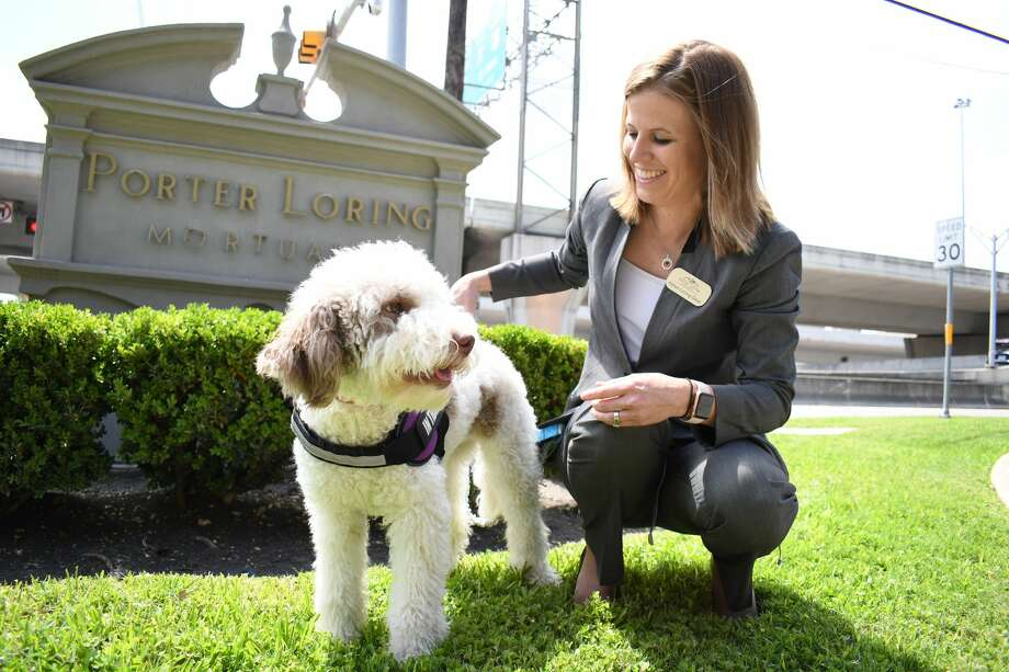 """Penelope """"Speranza"""" Dear, a Lagotta Romagnolo, is the first funeral home support dog in San Antonio, according to Porter Loring Mortuaries, where Penelope will be working. She is shown here with her primary care giver Helen Loring Dear, president of Porter Loring Mortuaries. (Courtesy of Porter Loring Mortuaries). Photo: Courtesy Of Porter Loring Mortuaries"""