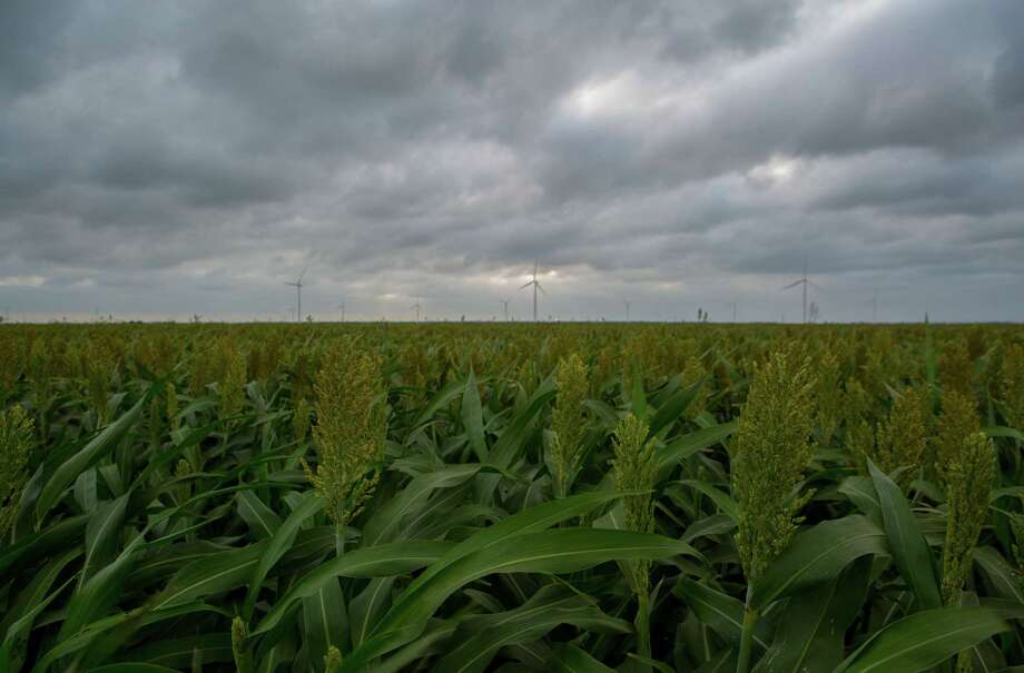 A sorghum field near Taft, Texas. Photo: Mark Mulligan, Staff Photographer / Mark Mulligan / Houston Chronicle / 2017 Mark Mulligan / Houston Chronicle