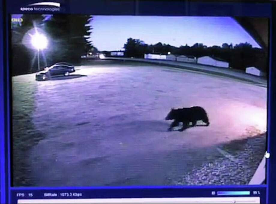 Surveillance footage shows a black bear outside of Woodland Diner in Gladwin, just before it tried to break in on Saturday. (Photo provided)