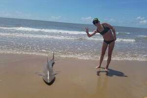 Lauren Biggers, from the Austin area, reeled in the 6- to 7-foot-long shark on Saturday morning.
