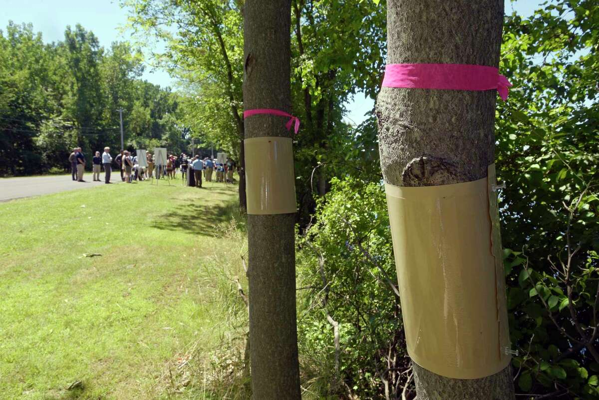 Some trees are seen with sticky bands around them in an effort to trap the spotted lantern fly as a press event is held at Peebles Island State Park on Monday, July 9, 2018, in Waterford, N.Y. The event was put on by New York State DEC, Ag & Markets and Parks to kickoff New YorkOs Invasive Species Awareness Week. The spotted lantern fly is an invasive species. (Paul Buckowski/Times Union)