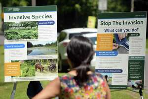 Informational posters are seen on display at a press event at Peebles Island State Park on Monday, July 9, 2018, in Waterford, N.Y. The event was put on by New York State DEC, Ag & Markets and Parks to kickoff New YorkOs Invasive Species Awareness Week.   (Paul Buckowski/Times Union)