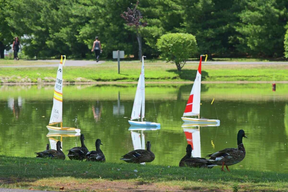 Ducks watch as sailboats are raced on the pond at The Crossings park on Tuesday, July 10, 2018, in Colonie, N.Y. Members of the Capital Area Model Boat Association race their boats at the park on Tuesdays and Thursdays. (Paul Buckowski/Times Union)