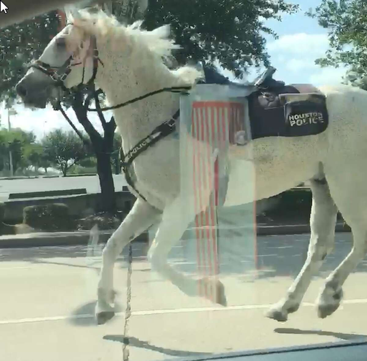 A Houston police horse got away from its handler on Tuesday when a suspected robber spooked the animal.See other funny animal photos from Houston Chronicle archives in the following gallery.