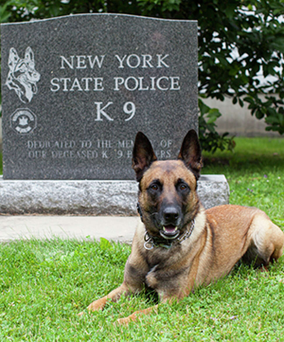 Brink is a male Malinois who specializes in sniffing out explosives. He is based at Division Headquarters in Albany with the Special Operations Response Team, and is handled by Technical Sgt. Jason Brewer. Brink is named after Trooper David C. Brinkerhoff. The 29-year-old was shot dead on April 25, 2007, while searching a Delaware County home where a burglar alarm was sounding. Troopers were already in the area looking for a man accused of shooting Trooper Matthew J. Gombosi earlier that day, and Brinkerhoff came upon him inside the home. The suspect fatally wounded Brinkerhoff and also shot Trooper Richard G. Mattson in an exchange of gunfire. Brinkerhoff spent nearly 10 years with the State Police and was assigned to the Coxsackie barracks when he died.
