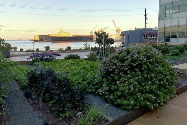 Stem, a restaurant in Mission Bay, not only offers great water views but the expansive patio is filled with gardens.