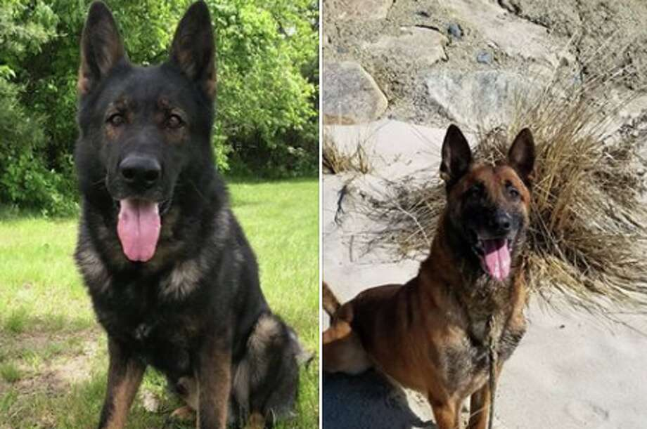 "More than 500 people applied to adopt two police dogs retiring from the Massachusetts State Police in the 24 hours after the troopers posted online seeking ""safe, loving furever homes"" for the canines on July 10, 2018. Photo: Massachusetts State Police"