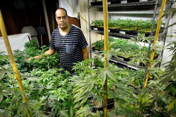 Alexis Bronson is surrounded by his cannabis clones he grows in his facility as seen on Tuesday Jan. 23, 2018. Bronson is the owner of Medicinal Organic which supplies clones of plants as well as seeds to cannabis dispensaries throughout the San Francisco Bay Area.