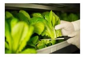 Founded by Sonia Lo, Crop�One of San Mateo�has entered into a joint venture with Emirates Flight Catering�for a $40 million deal to�build the world's largest vertical farming facility in Dubai. It will produce�3 tons of leafy greens daily.