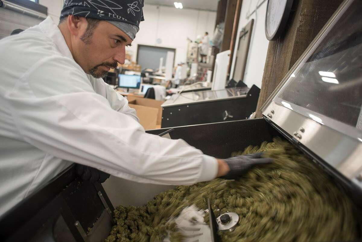 Cannabis is packaged and processed at Flow Kana, a CA-based cannabis brand that sources from small batch craft farmers, at their facility in Redwood Valley, CA on July 13, 2018. George Wilson runs the trimming machine at Flow Kana.