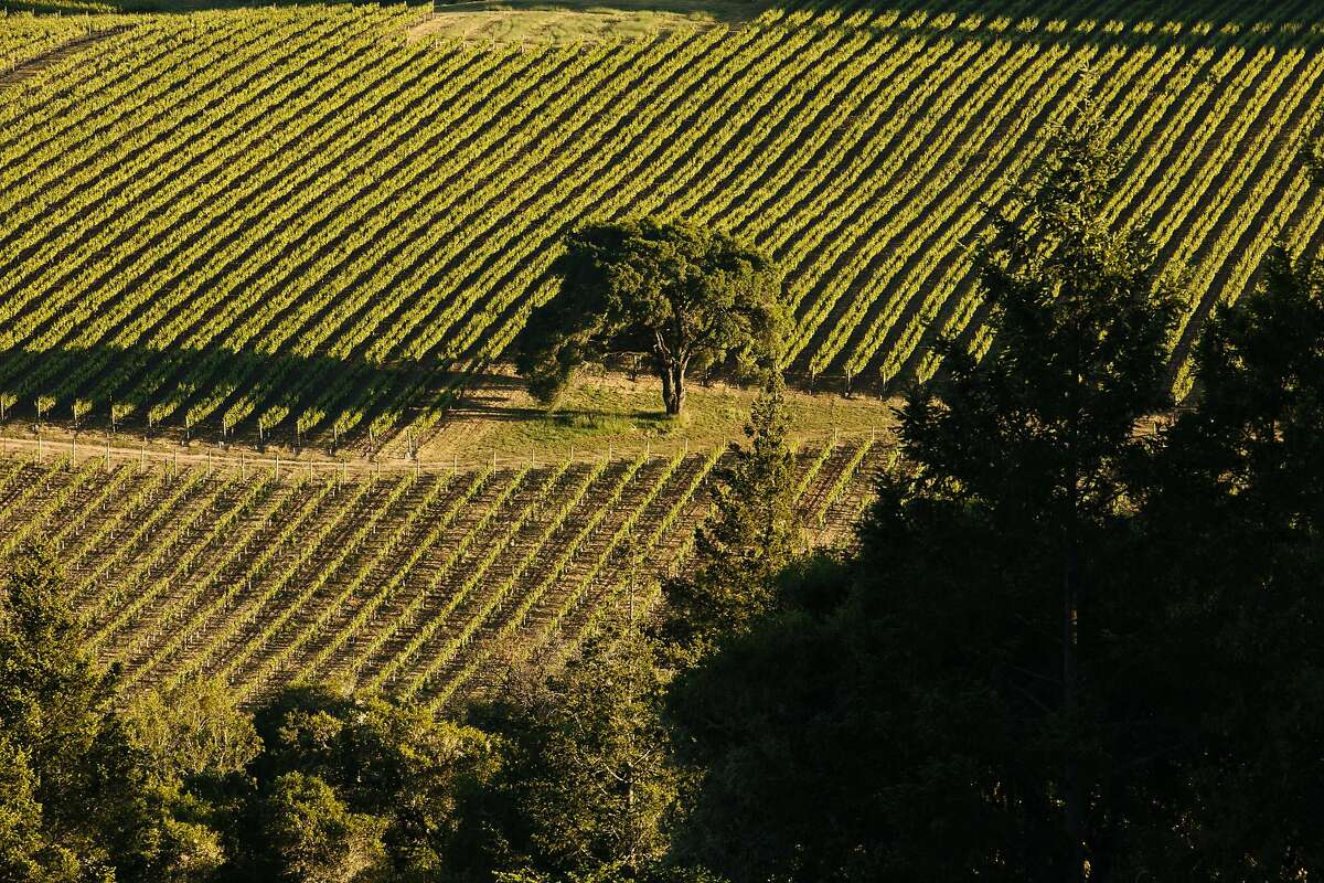 Vineyards in the Anderson Valley photographed in Philo, Calif., Sunday, May 27, 2018.