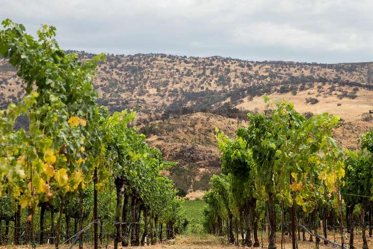 Lush green grapevines sit against a hill of charred trees at Signorello Winery in Napa, Calif. Friday, July 13, 2018.
