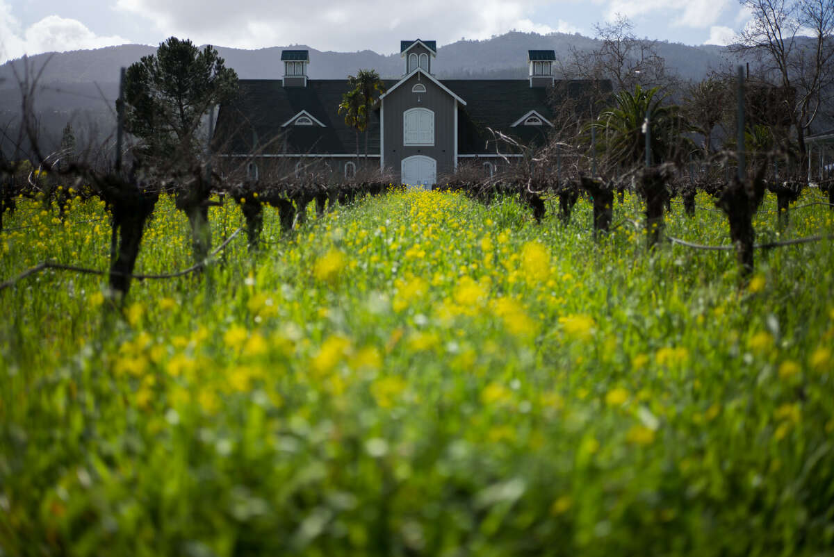 Vines and Mustard flowers surroundCorisonWinery in St. Helena, Calif. on Thursday, Feb. 16, 2017.Corison Winery is housed in a barn on St. Helena Highway.