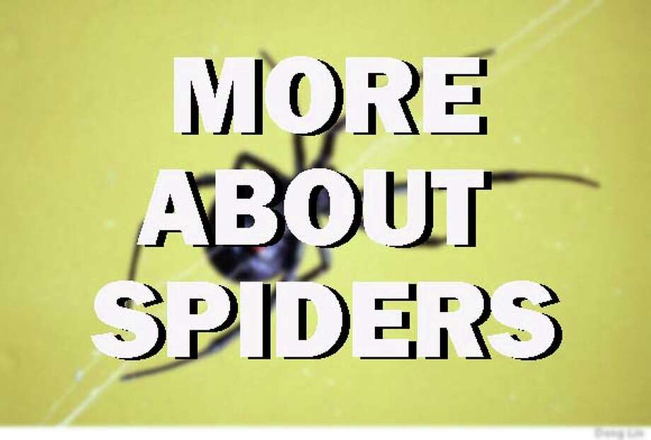 Click through to learn more about various types of spiders found in the United States. Photo: Courtesy Of Houston Chronicle