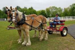 The Washington County Draft Animal Association presented at the Annual Saratoga Horse Symposium on May 19th, 2018 to teach attendees how to hitch draft horses for driving, as well as safety when it comes to hitching, driving, and rules of the road. (Provided)