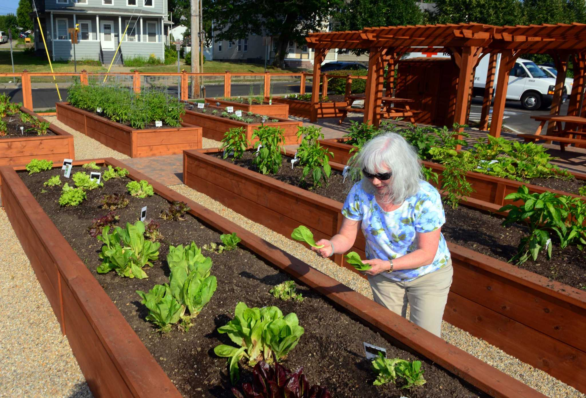 United Way\'s community gardens fill vacant spots and stomachs in the ...