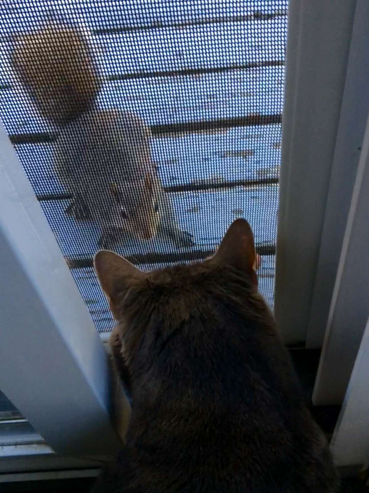 """Anthony Chouffi said this momentous staring contest at his Clifton Park home took a little lucky timing to capture. He speculates that the squirrel was never scared ? """"probably due to screen between them."""""""