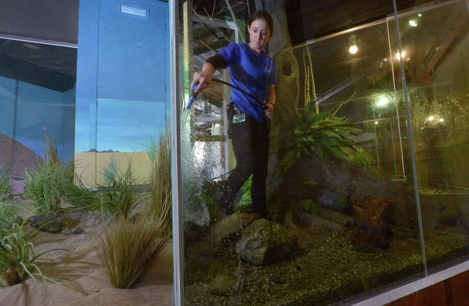 Senior Animal Aquarist of Amphibians and Reptiles, Sarah Penfold, readies the different biomes for the new exhibit, Just Add Water,  at The Maritime Aquarium Wednesday, July 18, 2018, in Norwalk, Conn. The Maritime Aquarium is hoping to have the new exhibit open for this weekend where they are celebrating the 30th anniversary this month and will have 'Throwback Pricing' on Saturday and Sunday with 1988 admission fees, just $9.50 for adults and seniors, and $5.50 for children 3-12. Photo: Erik Trautmann / Hearst Connecticut Media / Norwalk Hour
