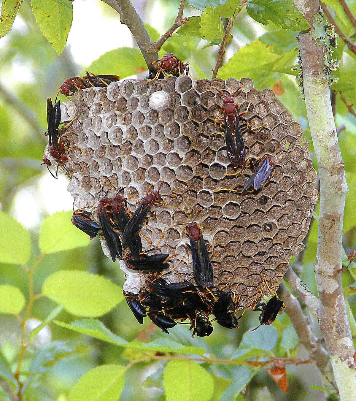 Wasps (and other flying, stinging insects) Yellowjackets, mud daubers and other wasps can build nests around your home. You definitely want to avoid them, as stings can be painful.