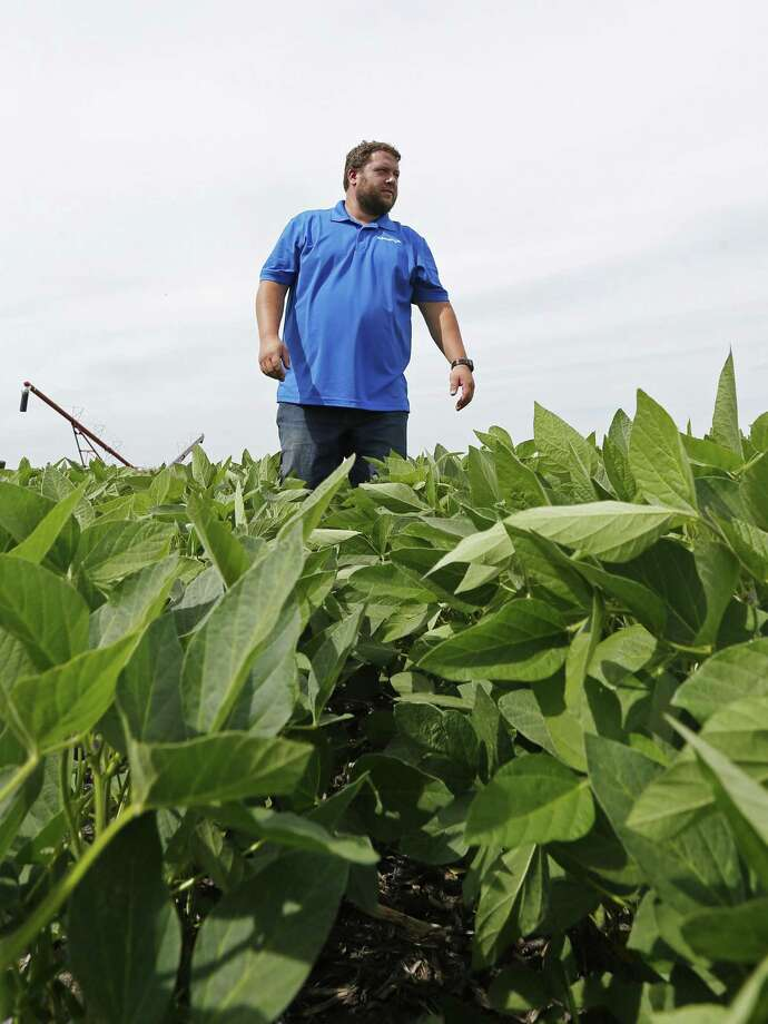In this July 18, 2018 photo, soybean farmer Michael Petefish walks through his soybeans at his farm near Claremont in southern Minnesota. American farmers have put the brakes on unnecessary spending as the U.S.-China trade war escalates, hoping the two countries work out their differences before the full impact of China's retaliatory tariffs hits American soybean and pork producers. Photo: Jim Mone /Associated Press / Copyright 2018 The Associated Press. All rights reserved.