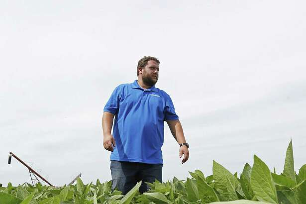 In this July 18, 2018 photo, soybean farmer Michael Petefish walks through his soybeans at his farm near Claremont in southern Minnesota. American farmers have put the brakes on unnecessary spending as the U.S.-China trade war escalates, hoping the two countries work out their differences before the full impact of China's retaliatory tariffs hits American soybean and pork producers.