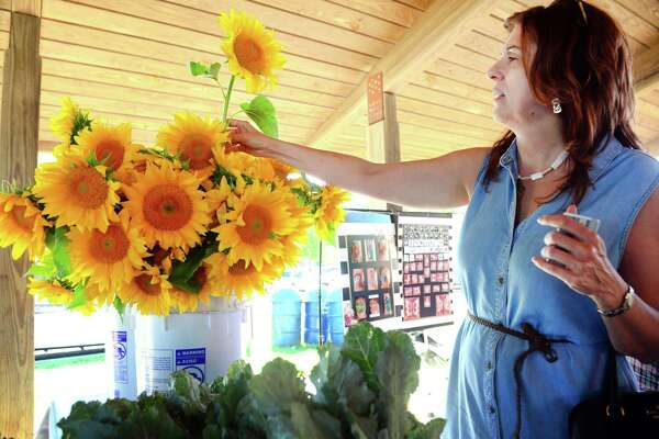 Laura Betlow, of Milford, picks out a sunflower from the Massaro Farm in Woodbridge booth at the Walnut Beach Farmers Market in Milford on Thursday, July 19, 2018. The market is sponsored by the Walnut Beach Arts and Business Association (WABABA). The market is held every third Thursday until October from 4 p.m. to 7 p.m.