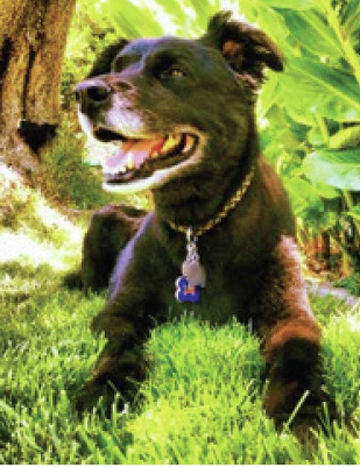Pets Remembered: Flex Photo: Courtesy Photo