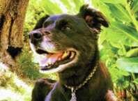 Pets Remembered: Flex