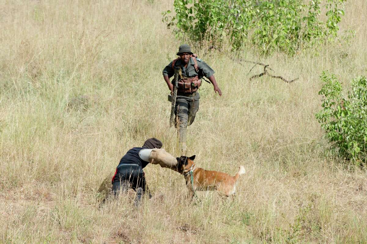 A ranger and a police officer demonstrate how dogs are being used to disable suspected poachers at the Kruger National Park in Skukuza, South Africa, in this 2015 file photo.