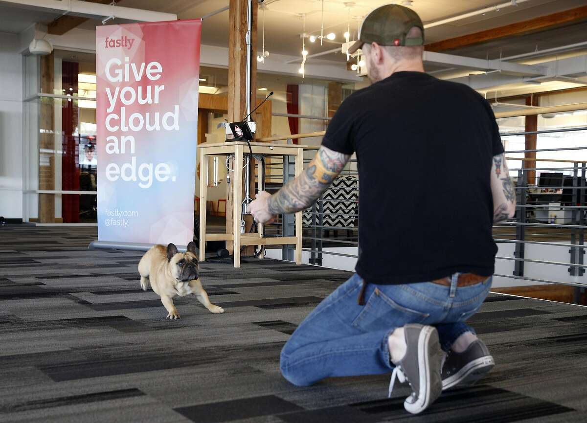 Muchacho races towards Ryan Landry at the dog-friendly offices of Fastly in San Francisco, Calif. on Friday, July 20, 2018. Employees can schedule which days they can bring their dogs in advance where as many as five canines are allowed in the office each day.