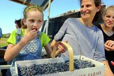 Keren Roitman, 8, of Stamford, enjoys the spoils of her labor after an afternoon of blueberry picking at Jones Family Farm in Shelton on Wednesday. With Keren on the Berry Ferry is her mom Sonia and sister Rebecca, right. The farm is open for picking on Tuesday through Saturday, 9:00am to 5:30pm (with picking available until 6:00pm.) For the Farmer Jones' Crop Report call: (203) 929-8425.