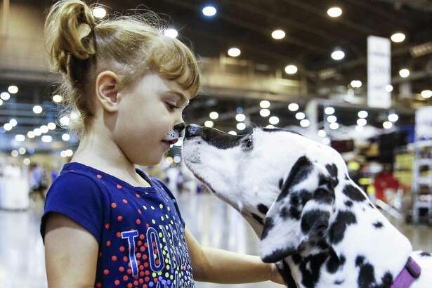 Nour Darbonne-Abuzulof, 3, greets Maya the Dalmatian at the Houston World Series of Dog Shows at NRG Center Saturday July 21, 2018 in Houston. (Michael Ciaglo / Houston Chronicle)